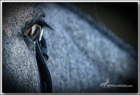 HIPPOLLYWOOD.com Equestrian Photography | Ad-design